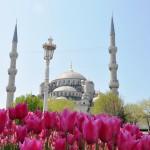 tulip moschea 3